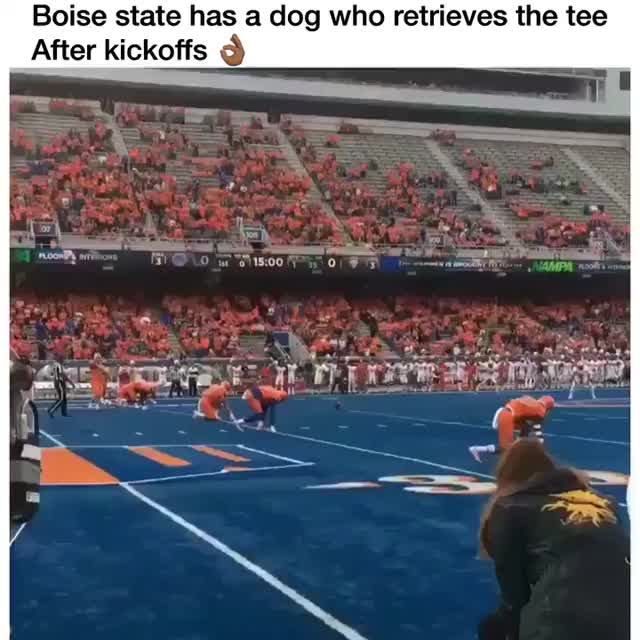 Watch and share Source:  SB Nation College Football GIFs by Nomorefoxgiven on Gfycat