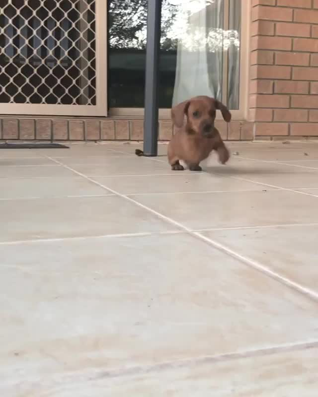 Watch and share Tiny GIFs by vani  on Gfycat