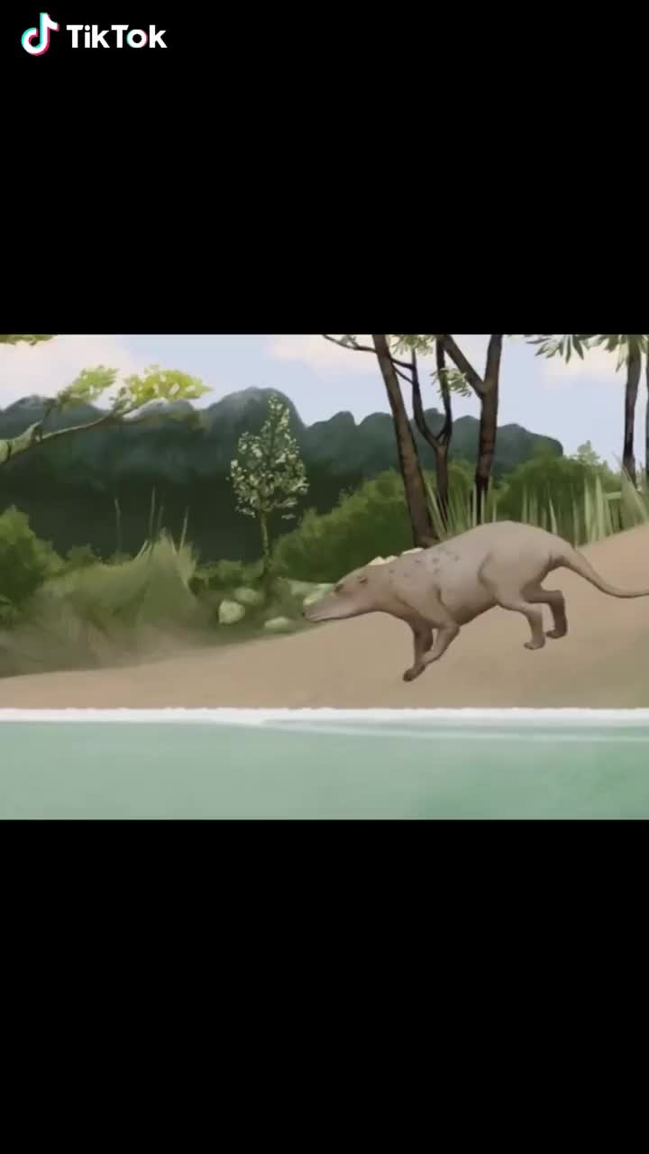The evolution of whales GIFs