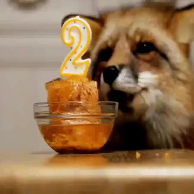 Watch /r/foxgifs - from myfoxfamily.ru GIF by @cakejerry on Gfycat. Discover more aww, cute, fox, foxes, foxgifs GIFs on Gfycat