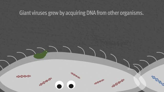 Watch and share Giant Virus Growing By Acquiring DNA. Carla Schaffer AAAS. GIFs on Gfycat