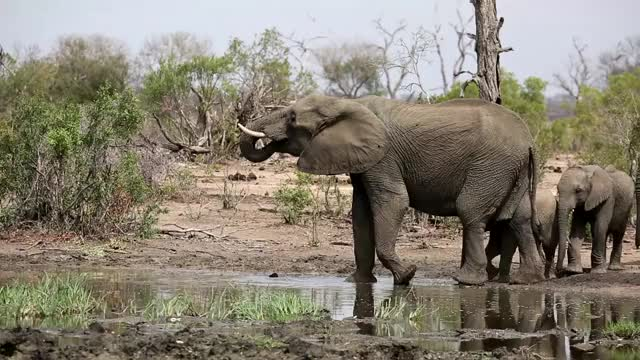 Watch Elephants Winnis' Wallows GIF by @londolozi on Gfycat. Discover more related GIFs on Gfycat