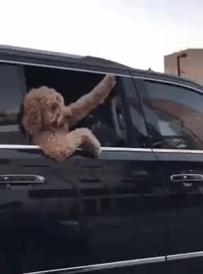 aww, cute, dog, funny, hello, hi, puppy, wave, Puppy Wave GIFs