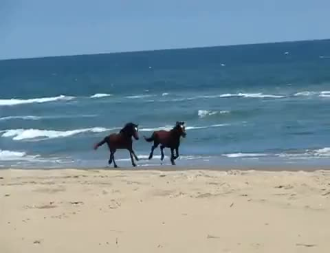 Watch and share Horses GIFs on Gfycat