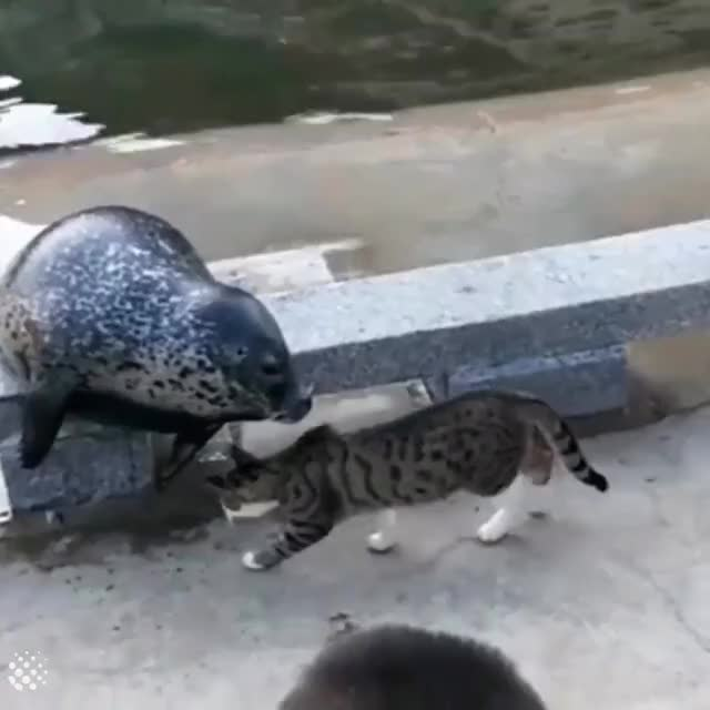 Watch and share Seal GIFs and Cat GIFs by GIFs For Everything on Gfycat