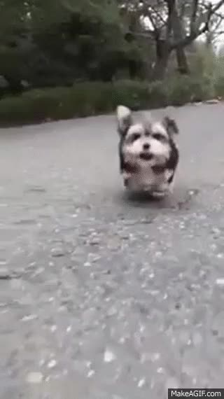 Watch and share Cute Puppy GIFs on Gfycat