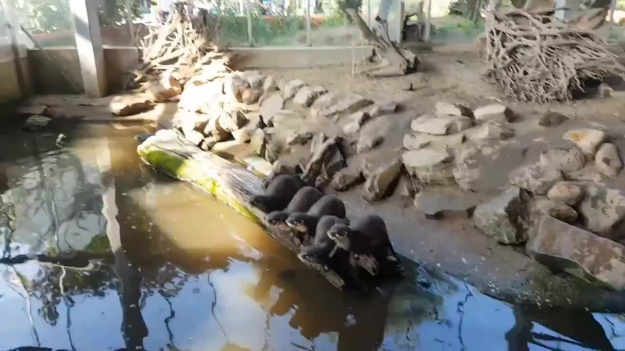 animals, excited, funny, otter, zoo, Hungry otters GIFs