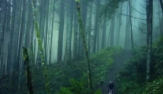 MTB, Forest MTB GIFs