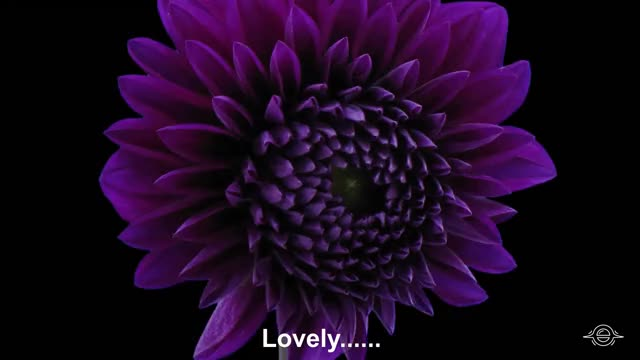 Watch and share Flowers Timelapse GIFs and Flowers Blooming GIFs by Cindy Bustillos on Gfycat