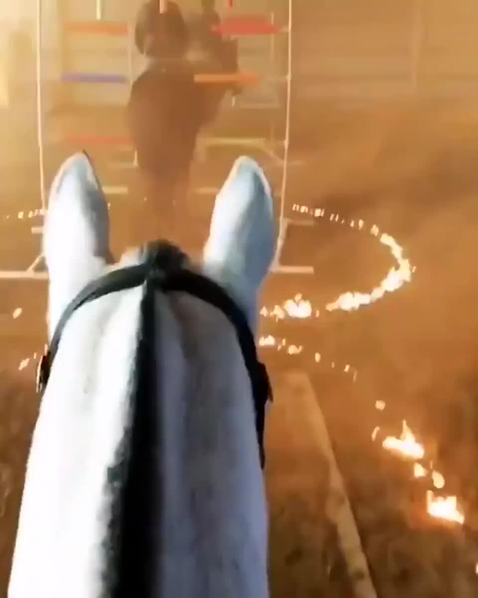 Police horse training GIFs