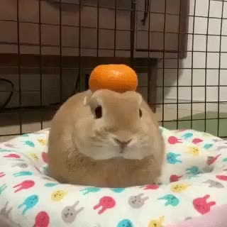 Watch and share Bunny Buddha GIFs and Orange GIFs on Gfycat