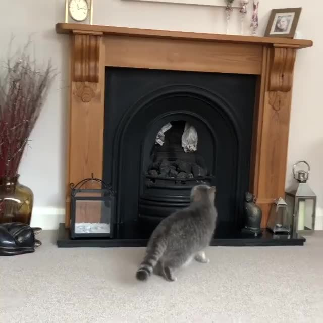 Watch and share Too Much Fancy Feast. GIFs by PM_ME_STEAM_K3YS on Gfycat