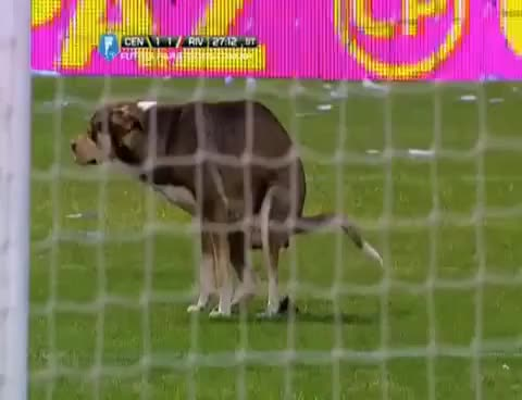 Watch Perro se Caga en la Cancha de Rosario central   River Plate vs Rosario Central 360p GIF on Gfycat. Discover more related GIFs on Gfycat