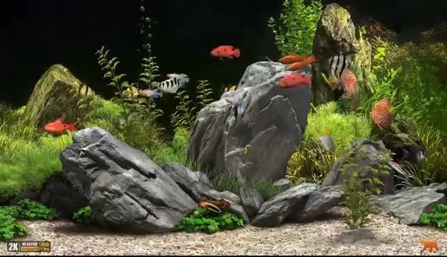 Watch and share ★ Dream Aquarium ★ UHD Screensaver ★ 10 FishTanks ★ 60fps ★ GIFs on Gfycat