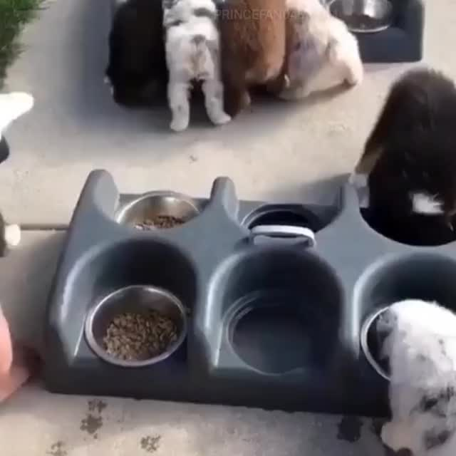Watch and share Child Feeding Dogs GIFs and Hold My Beer GIFs by Cindy046  on Gfycat