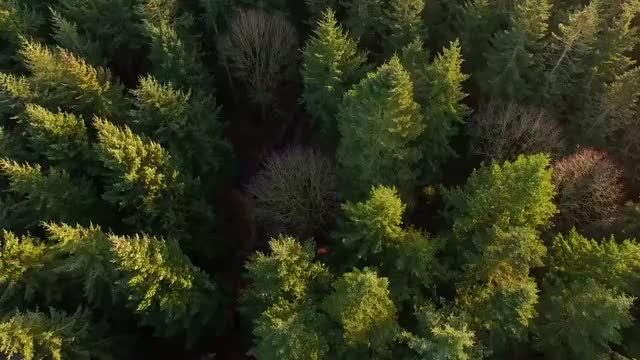 Watch and share Forest Background GIFs on Gfycat