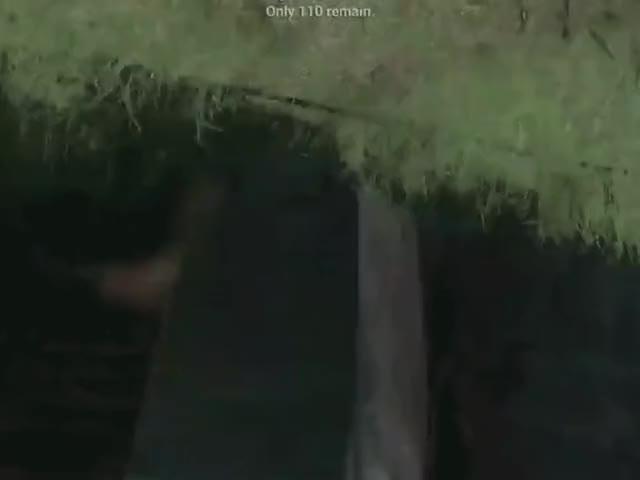 nazi mom (reddit)