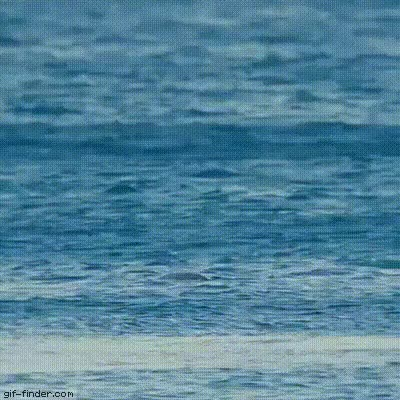 Watch and share Dolphin GIFs on Gfycat
