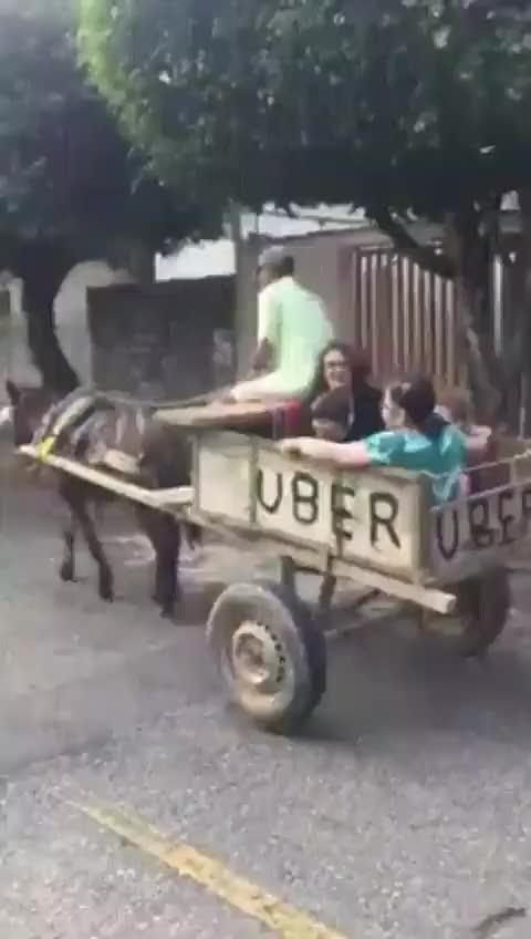 Watch Uber da roça GIF by Humordido (@humordido) on Gfycat. Discover more related GIFs on Gfycat