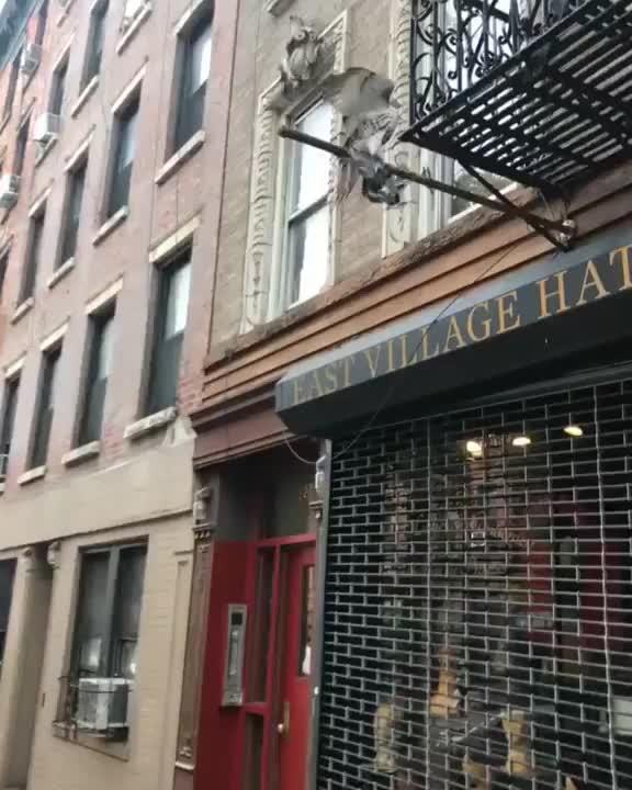 Pets & Animals, viralhog, Hawk Catches Pigeon in New York GIFs