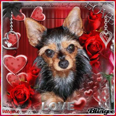 Valentine´s   LOVE  with little sweet dog:-) GIFs