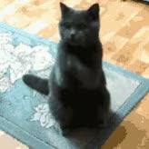 Watch 【日】お願いします【英】PLEASEのGIF画像(シーン:お願いする猫(祈り)) GIF on Gfycat. Discover more GIFMAGAZINE for Messenger, PLEASE, お願いします GIFs on Gfycat