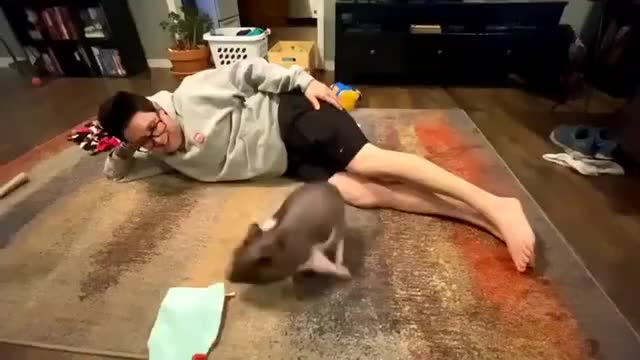Watch and share Animals Playing GIFs and Pigs Running GIFs by lnfinity on Gfycat