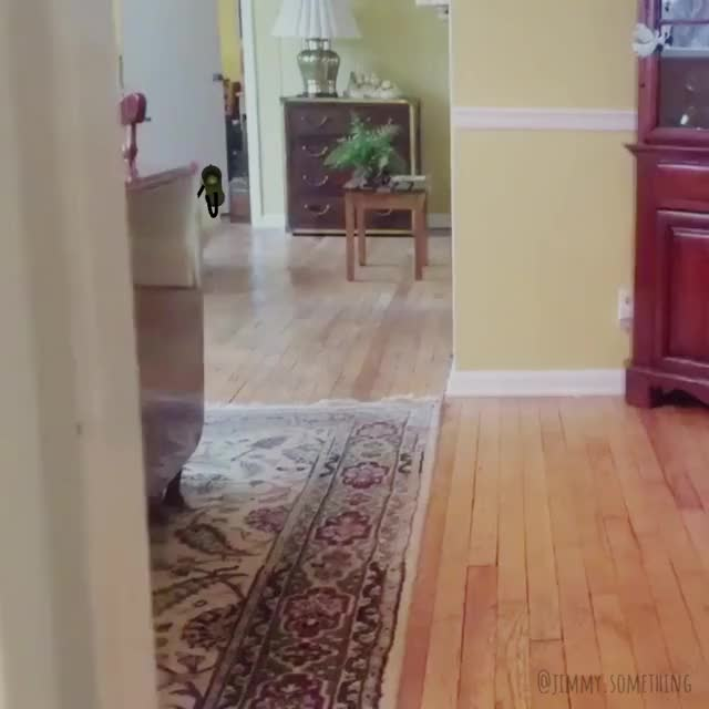 Watch and share Chicken GIFs by jimmysomething on Gfycat