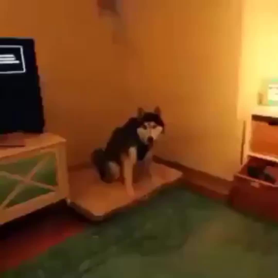 Thespazattack01, This dog sneezing GIFs