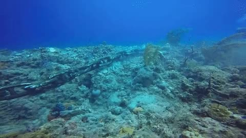 Watch and share Video Shows Coral Reef Being Destroyed In Seconds By Cruise Ship's Anchor | The Huffington Post GIFs on Gfycat
