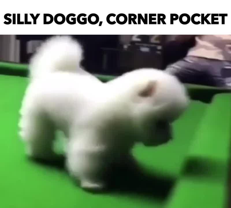 GIF Brewery, pocket pup, SILLY DOGGO, CORNER POCKET GIFs