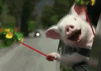 Watch and share Ride Pig GIFs on Gfycat