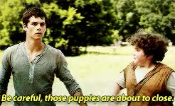 Watch and share Thomas Is So Sassy GIFs and The Maze Runner GIFs on Gfycat