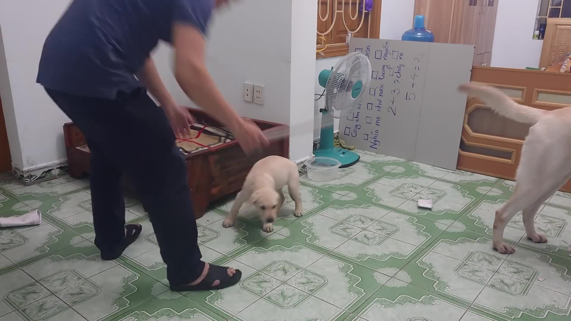 Owner conducts an experiment to see how far his dog would go to save his puppy GIFs