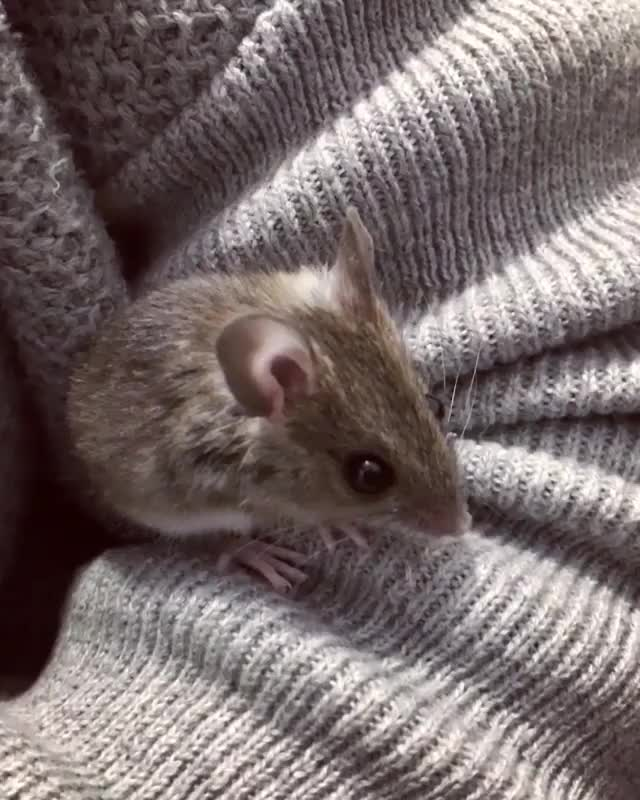 Watch and share /r/mousegifs - From Polzetexplorer GIFs by cakejerry on Gfycat