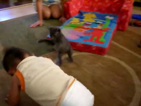 catsmurderingtoddlers, hitmanimals, toddler, Toddler vs. Kitten GIFs