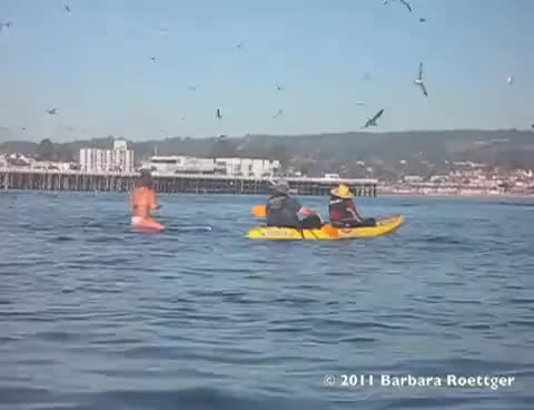 Watch Surfer Almost Swallowed by Whale GIF on Gfycat. Discover more bricks, lucky, surfer, swallow, whale GIFs on Gfycat