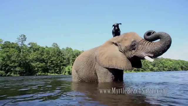 Watch and share Elephant GIFs and Forever GIFs on Gfycat