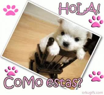Watch and share Hola Como Estas Hola Como Estas GIFs on Gfycat