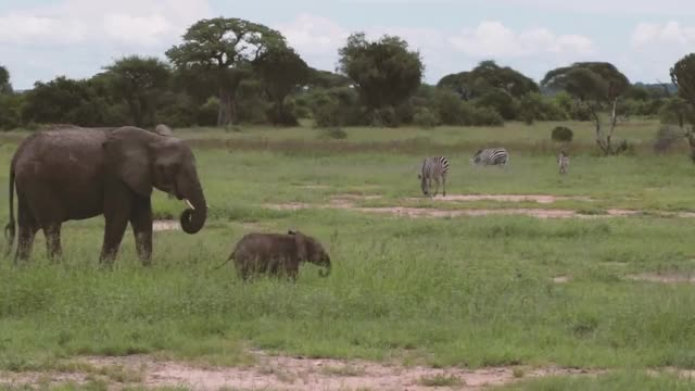 Watch baby elephant zoomies GIF on Gfycat. Discover more elephant GIFs on Gfycat