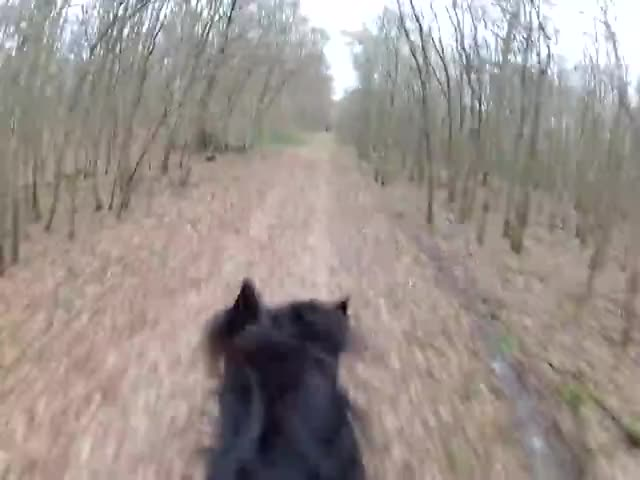 Watch horse riding, GIF on Gfycat. Discover more Camera, Check, Dressage, Equestrianism (Sport), Friese, Friesen, Gopro, Helmet, Horses, Hunter, Jumping, Out, Pferd, Pferde, Pony, Riding, Romeo, Western GIFs on Gfycat