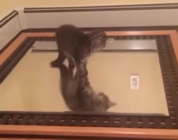 cat, funny, cat fighting a mirror image of itself GIFs