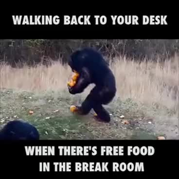 Watch When There's Free Food In The Break Room GIF on Gfycat. Discover more related GIFs on Gfycat
