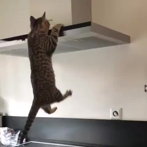 Watch and share Locecats GIFs and Lovecat GIFs by Mandeep websolution on Gfycat