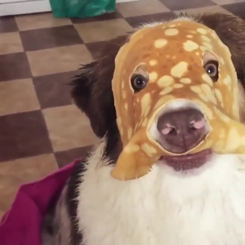 funny, dog, aww, Lenny, The Creped Crusader GIFs