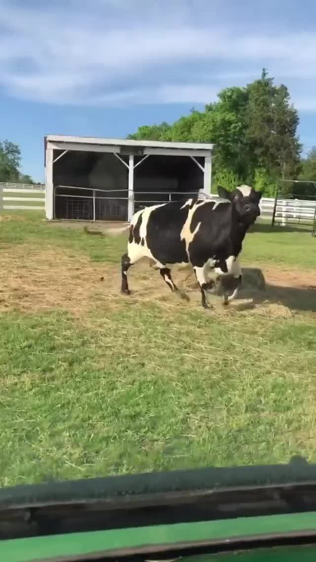 Watch and share Maybelle Gets Excited When She Sees The Cart At The Gentle Barn Sanctuary GIFs by lnfinity on Gfycat