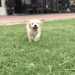 Watch puppers GIF on Gfycat. Discover more dog GIFs on Gfycat