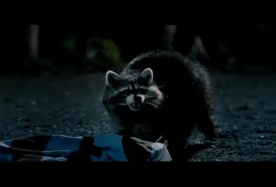 Watch Racoon enemy GIF on Gfycat. Discover more Beth, Cooper, Hayden, Love, Moment, Truth, You GIFs on Gfycat
