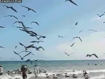 Watch and share Bird Attack GIFs on Gfycat
