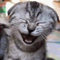 Watch and share Animated Laughing Cat Photo: Laughing Cat Laughingcat.gif animated stickers on Gfycat